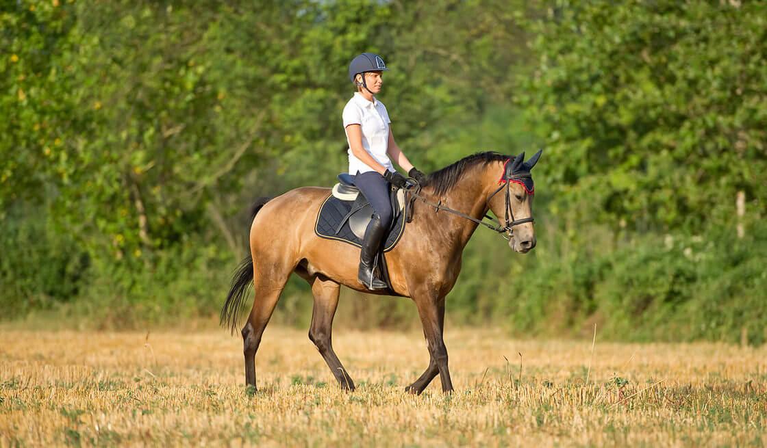 Passeggiata a cavallo nel parco naturale di Barsento - Tedi Tour Operator