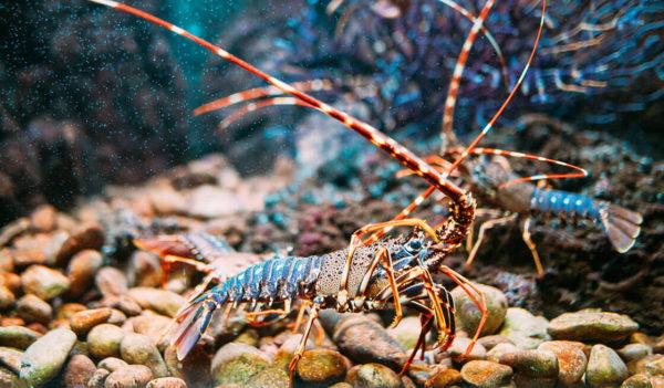 17 - Pesca sportiva dell'aragosta e grotte marine di Polignano a Mare - Tedi Tour Operator