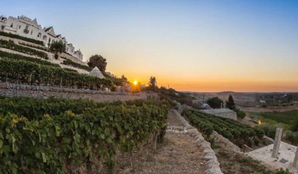 27 - Locorotondo, Vineyard Tour & Wine Tasting - Tedi Tour Operator