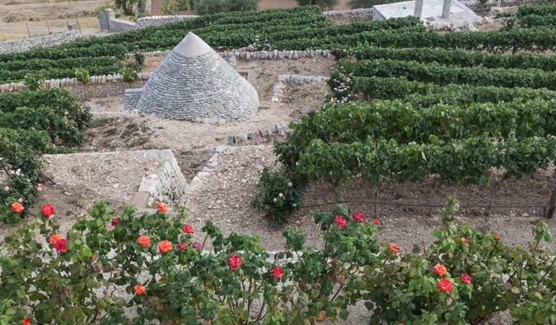 Locorotondo, Tour Vigne & Degustazioni Vini - Tedi Tour Operator