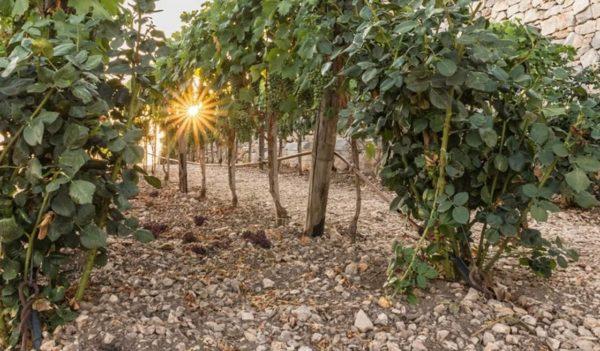 27 - Locorotondo, Tour Vigne & Degustazioni Vini - Tedi Tour Operator