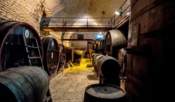 Tour nelle Cantine di vino in Puglia - Tedi Tour Operator