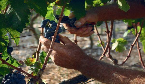 Wine tour - Tedi Tour Operator