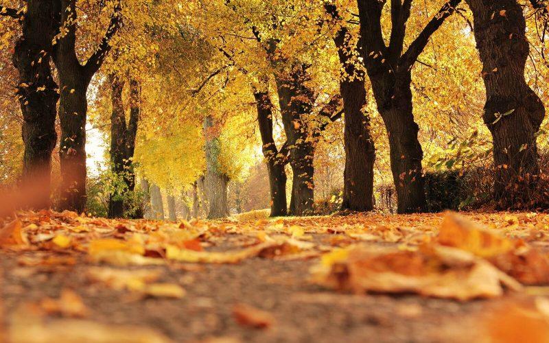 tedi-tour-foliage-puglia-autunno-gargano-murgia-salento